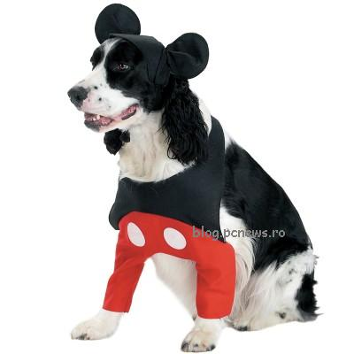 Costume dogs funny
