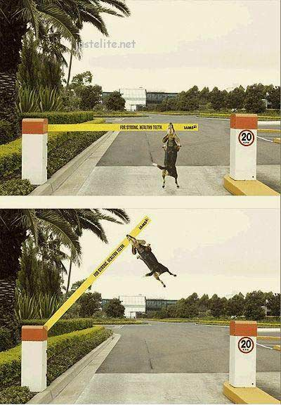 Coolest outdoors ads