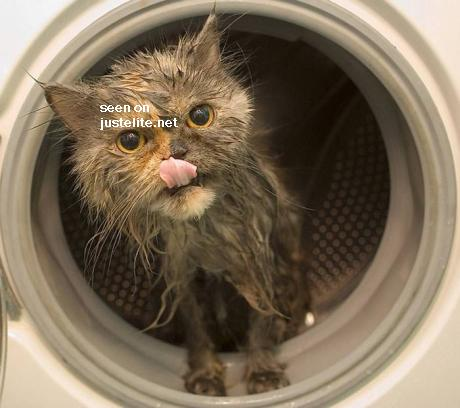 Cats washer