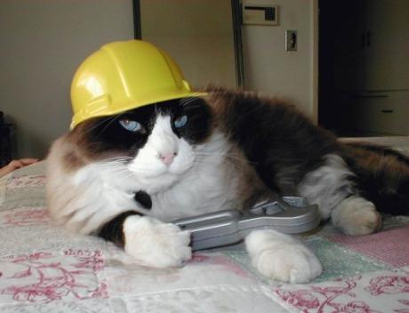 Cat worker