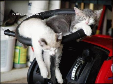 Funny Cats for week-end