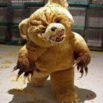Today Teddy Bear is upset