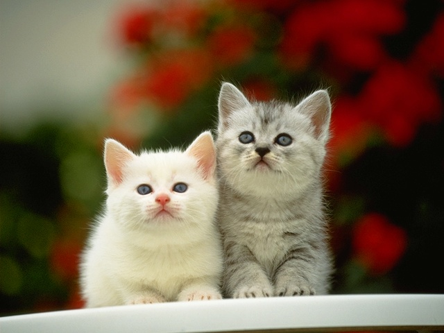 Cats - so cute