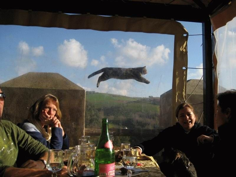 flying cat spectacle