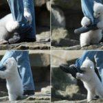 Amazing! Bear attack a human!