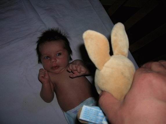 bunny toy