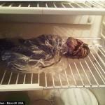 Russian woman: I keep an alien corpse in my fridge